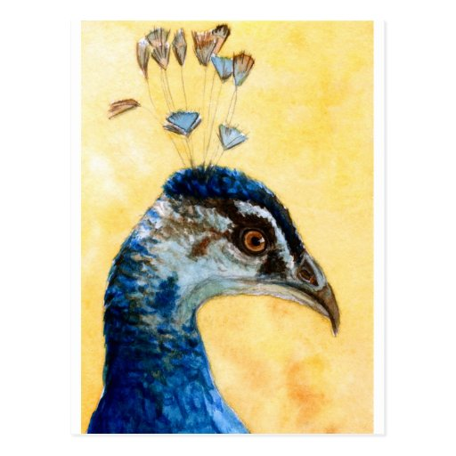 Indian Peafowl 721 design by Schukina Post Cards
