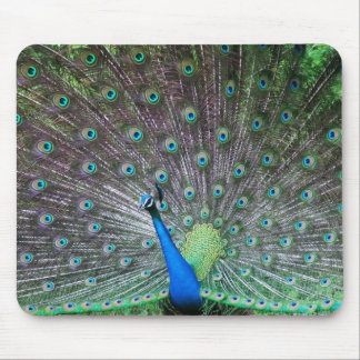 INDIAN PEAFOWL PEACOCK WILD BIRDS BLUES GREENS MOUSEPAD