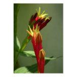 Indian Pink Wildflower ATC Photo Card