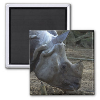 Indian Rhinoceros Magnet