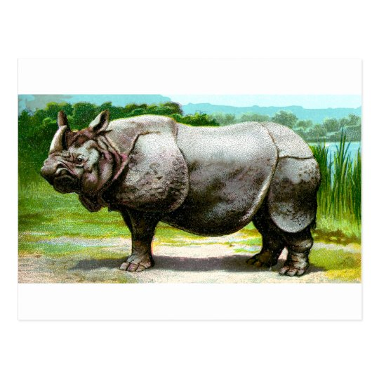 Indian Rhinoceros Postcard