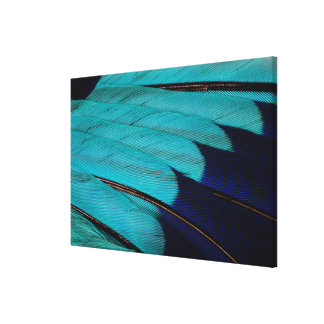 Indian Roller Feather Abstract Canvas Print