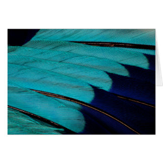 Indian Roller Feather Abstract Card
