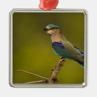 Indian Roller perched on open tree Christmas Ornament