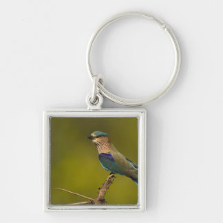 Indian Roller perched on open tree Key Chain