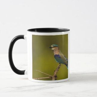 Indian Roller perched on open tree Mug