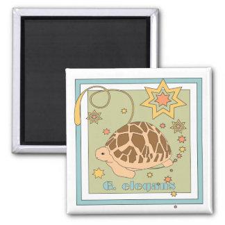 Indian / Sri Lankan Star Tortoise Magnet (stars)