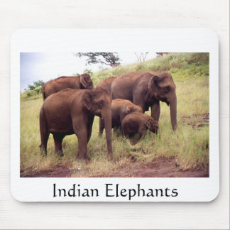 Indian wild elephants mouse pad