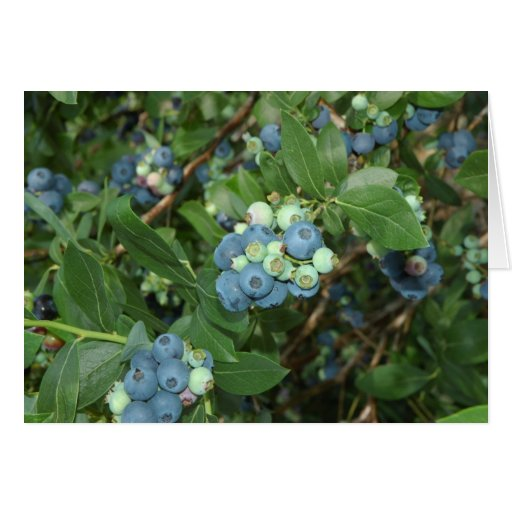 Indiana Blueberries Greeting Cards