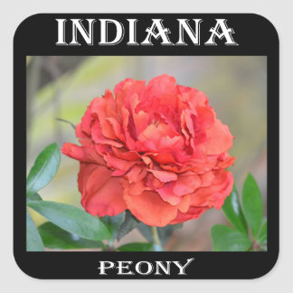 Indiana Peony Square Sticker