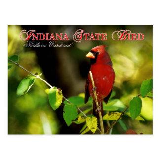 Indiana State Bird - Northern Cardinal Post Card