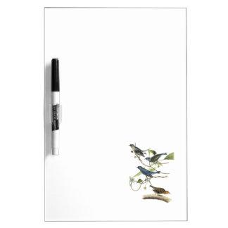 Indigo Bunting by Audubon Dry Erase Board