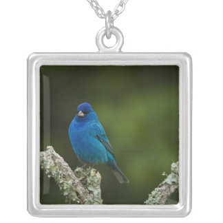 Indigo Bunting, Passerina cyanea, Coastal Silver Plated Necklace