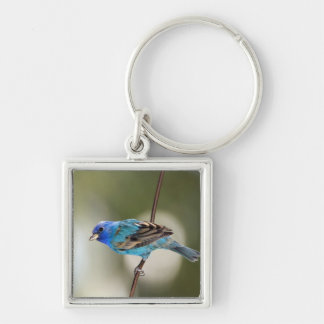 Indigo Bunting perched on bare branch Silver-Colored Square Key Ring