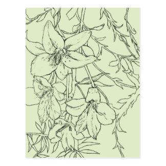 Individual Lily, Green. Postcard