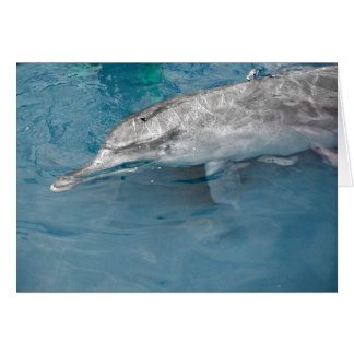 Indo Pacific Wild Dolphin Greeting Card