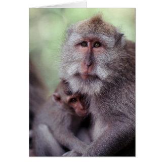Indonesia, Bali, Ubud, Long-tailed Macaque 1 Card