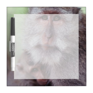 Indonesia, Bali, Ubud, Long-tailed Macaque 1 Dry Erase Board