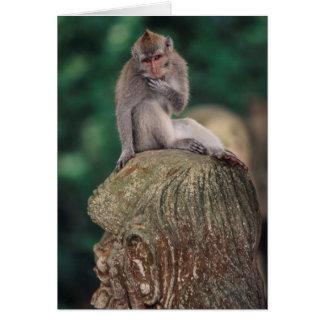 Indonesia, Bali, Ubud, Long-tailed Macaque 2 Card