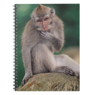 Indonesia, Bali, Ubud, Long-tailed Macaque 2 Note Book