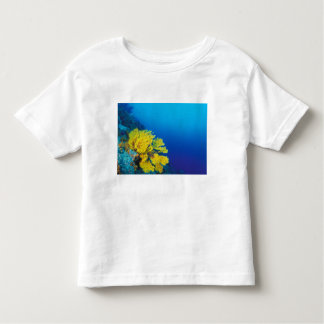 Indonesia, Banda Islands, prolific coral reefs Toddler T-Shirt