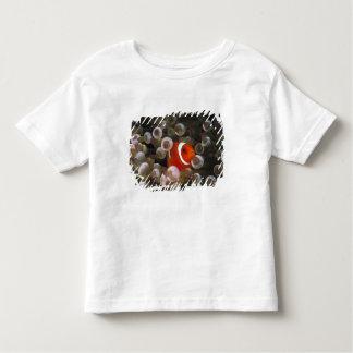 Indonesia, Komodo. Maroon clownfish, or Toddler T-Shirt