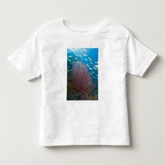 Indonesia, Raja Ampat. Yellowtail fusilier Toddler T-Shirt