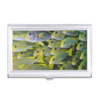Indonesia. Schooling Fish Business Card Holder