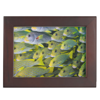 Indonesia. Schooling Fish Keepsake Box