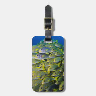 Indonesia. Schooling Fish Luggage Tag