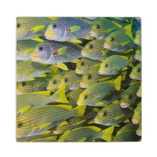 Indonesia. Schooling Fish Wood Coaster