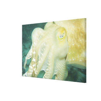 Indonesia, South Sulawesi Province, Wakatobi 2 Stretched Canvas Print