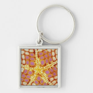 Indonesia. Starfish mouth, detail. Keychain
