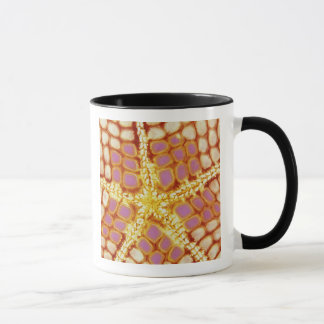 Indonesia. Starfish mouth, detail. Mug