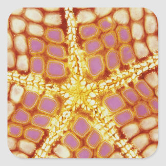 Indonesia. Starfish mouth, detail. Square Sticker