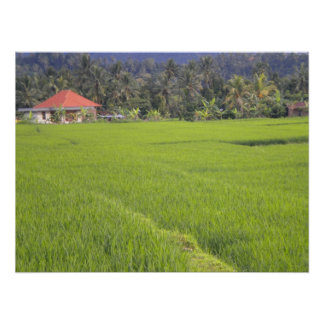 Indonesian ricefield poster