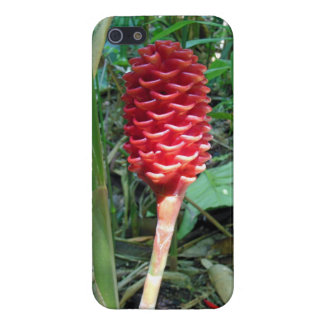 Indonesian Wax Ginger iPhone 5 Covers
