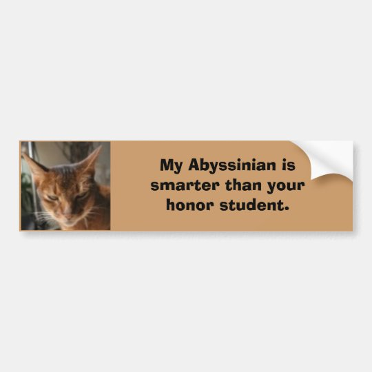 indy, My Abyssinian is smarter tha... - Customised Bumper Sticker
