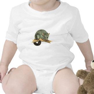 Infant Creeper - cooroy possum
