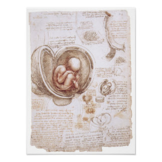 Infant in the Womb, Leonardo da Vinci Poster