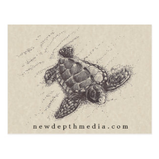 Infant Prey - Baby Sea Turtle Postcard