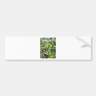 Infested olive tree by olive fruit fly bumper sticker