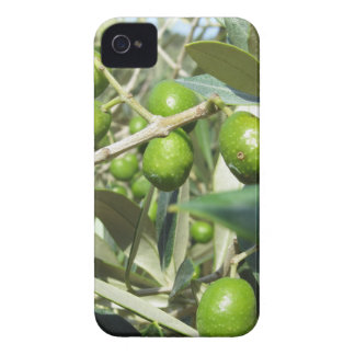 Infested olive tree by olive fruit fly Case-Mate iPhone 4 cases