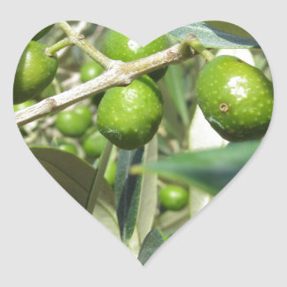 Infested olive tree by olive fruit fly heart sticker