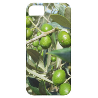 Infested olive tree by olive fruit fly iPhone 5 case
