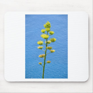 Inflorescence of Agave plant. Mouse Mat