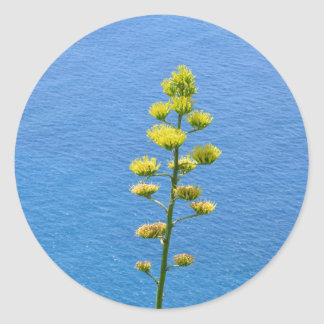 Inflorescence of an Agave plant Classic Round Sticker