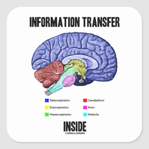 Information Transfer Inside (Brain Anatomy) Square Stickers