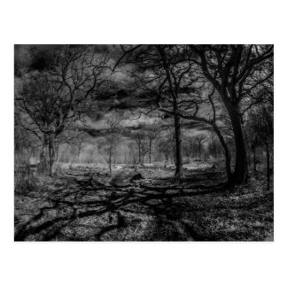 Infrared landscape shadows in the woods postcard