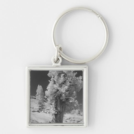 Infrared photo in East side of Yosemite National Keychain